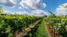 Kingscote Estate  & Vineyard Limited