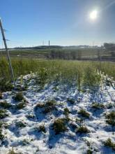 Winter sunshine over the vineyard
