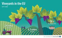 Vineyards in the EU - statistics