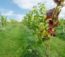 Bronze Vineyard Experience (2 people)