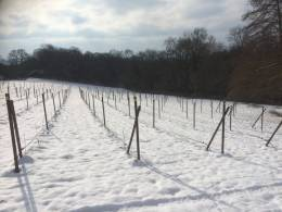 The Orchard Vineyard