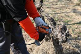 Pellenc Selion M12 Pruning Saw