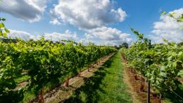 Kingscote Estate  & Vineyard Limited