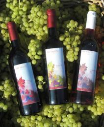 Abbey Vineyards - Amersham Vineyard