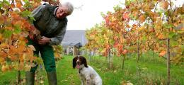 Carey Valley Wines - Uphill Vineyard