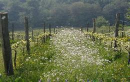 Davenport Vineyard - Horsmonden