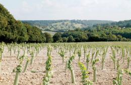 Hundred Hills Vineyard