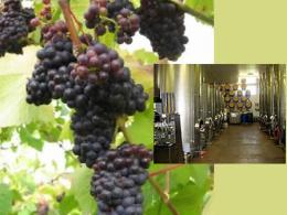 Penarth Vineyard