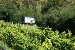 Little Waddon Vineyard