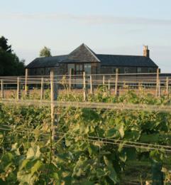 Laurel Vines Vineyard & Winery