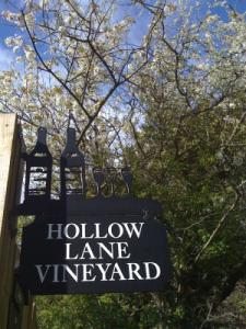 Hollow Lane Vineyard