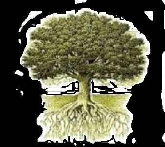 Little Oak Vineyard
