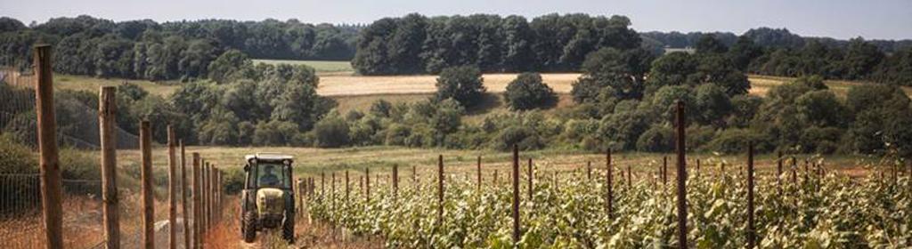 Grange Estate Wines (Burges Field)   The Great British Vineyards Guide